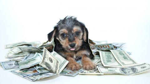 犬を飼う費用