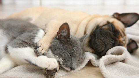 犬と猫を一緒に飼う