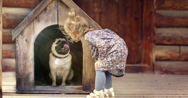 屋外で犬を飼う