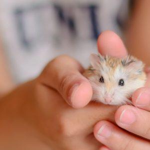 飼いやすい小動物