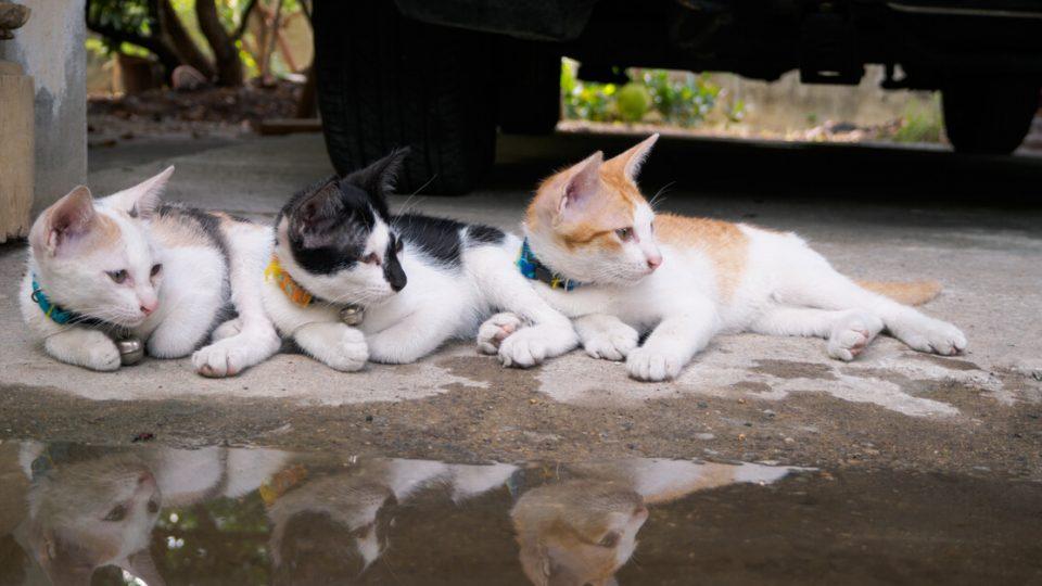 ケンカをしたりしない?猫を安全に多頭飼いするコツ
