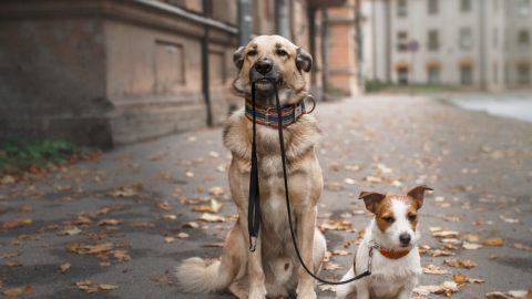 犬の多頭飼い