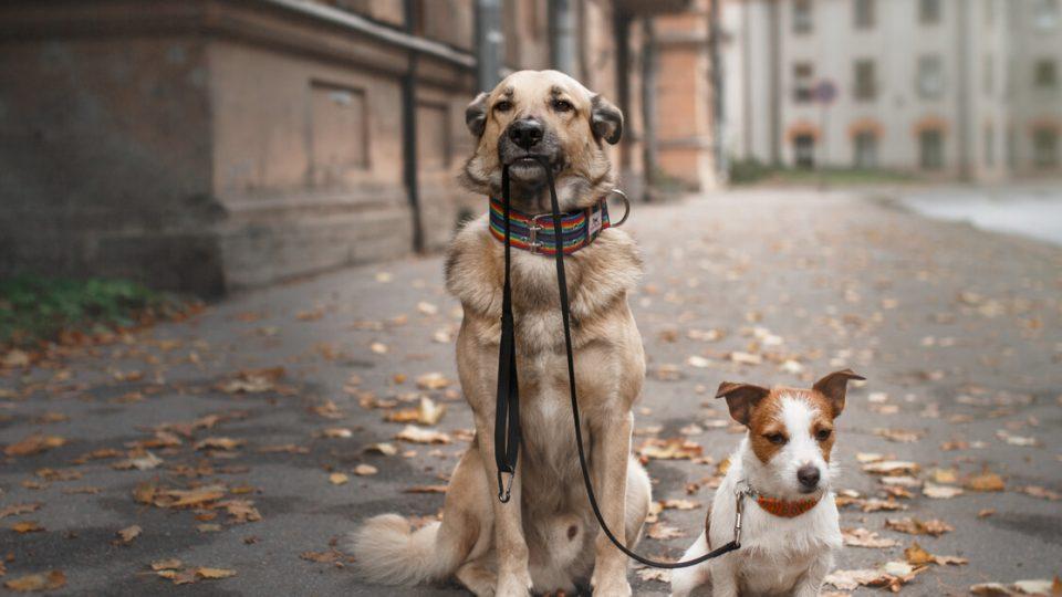 犬の多頭飼いは大変?楽しい?飼い方のポイントと注意点