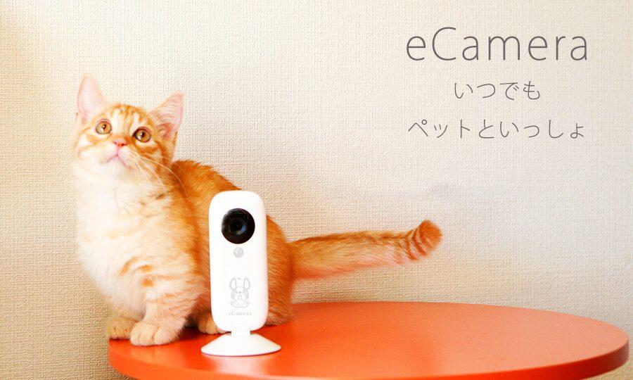 リンクジャパンが「eCamera」を販売。留守番のペットを見守るホームセキュリティIoTカメラ