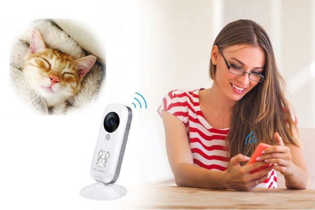 外出先からスマートフォンで猫を確認