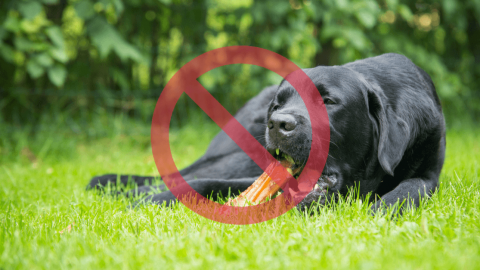 犬に食べさせてはいけない、避けたい食べ物7つ