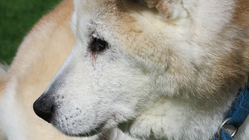終生飼養という考え方から、ペットの飼育を考える