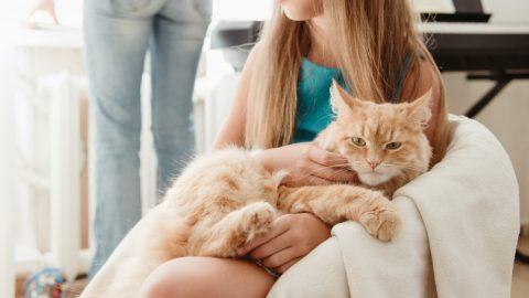 猫を飼う準備