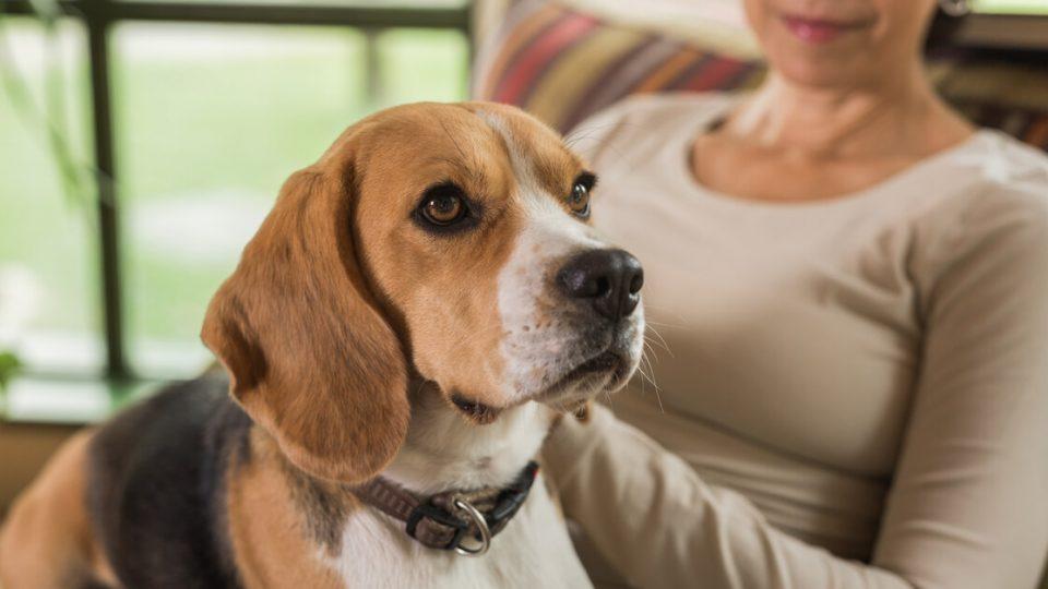 犬を飼うためには何が必要?心構えと準備するものについて
