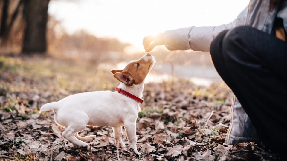 子犬の時期こそしつけは大事!しつけておきたいこととタイミング