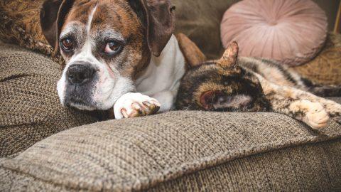 老犬と老猫
