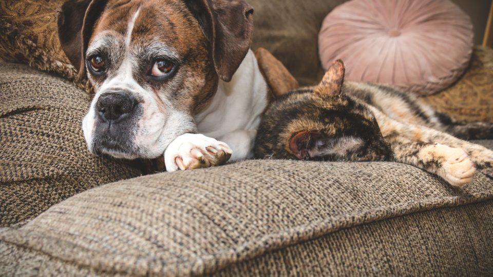 元気に長生きしてほしい!10歳過ぎた高齢犬・猫がペット保険に加入するには?