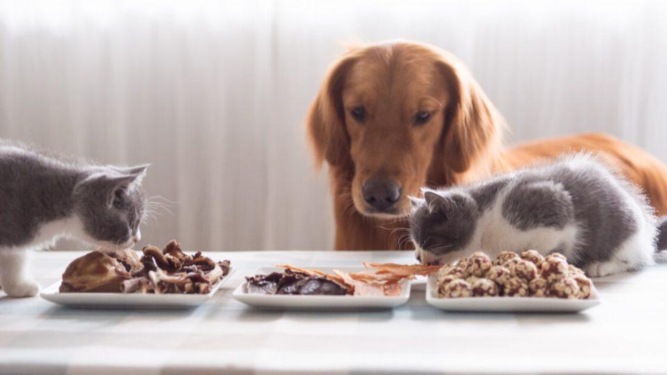 なぜ複数頭飼育するのか?犬・猫の多頭飼いの理由や人気の犬種・猫種
