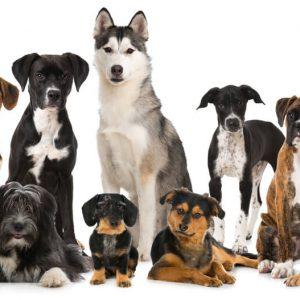 様々な犬種