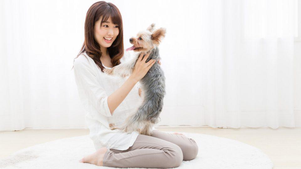 一人暮らしで飼いやすい犬種は?3つの選ぶポイントとおすすめの犬種